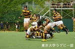 定期戦 vs慶應大-1 猪熊(NO8)